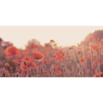 Art Group Field of Poppies by Ian Winstanley Photographic Print on Canvas
