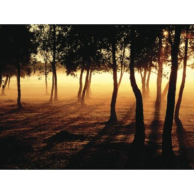 Art Group Mist and Sunlight by Jan Tove Canvas Wall Art