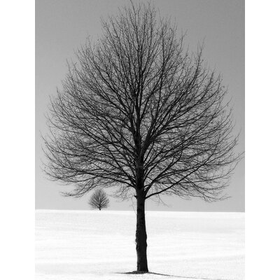 Art Group Winter Tree by Ilona Wellman Photographic Print on Canvas