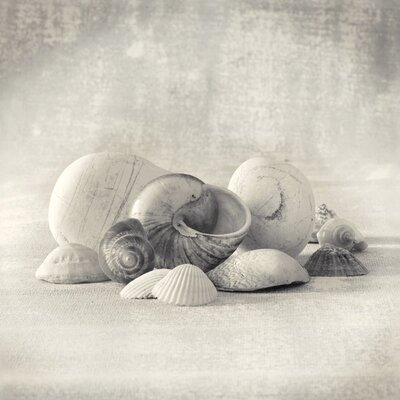 Art Group Still Life of Shells II by Ian Winstanley Canvas Wall Art