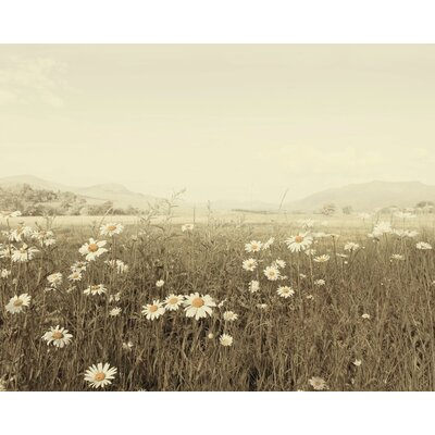 Art Group Field of Daisies by Ian Winstanley Canvas Wall Art