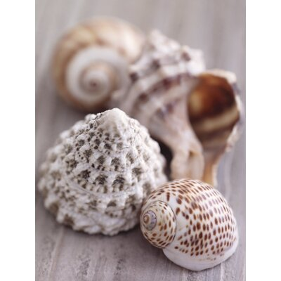 Art Group Shell Collection by Howard Shooter and Lauren Floodgate Canvas Wall Art