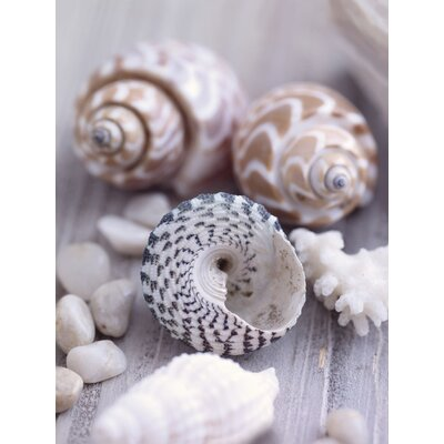 Art Group Shells and Pebbles by Howard Shooter and Lauren Floodgate Canvas Wall Art