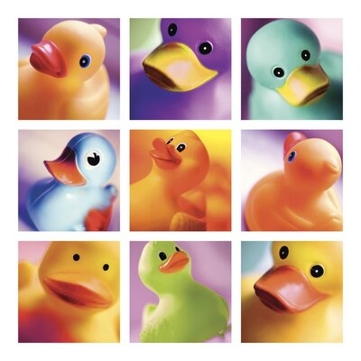 Art Group Duck Family Portraits by Ian Winstanley Collage Canvas Wall Art