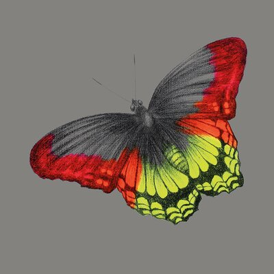 Art Group Wild Papillon by Louise McNaught Canvas Wall Art