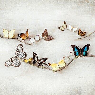 Art Group Array of Butterflies by Ian Winstanley Canvas Wall Art
