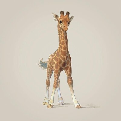 Art Group Giraffe by John Butler Canvas Wall Art