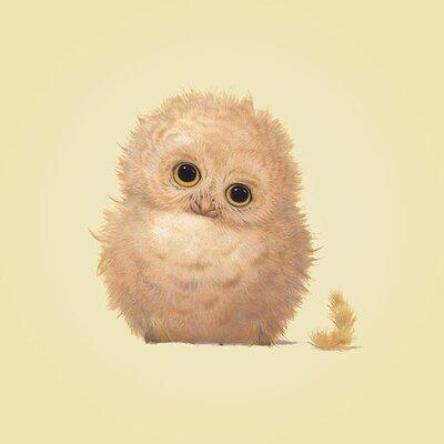 Art Group Owl by John Butler Canvas Wall Art
