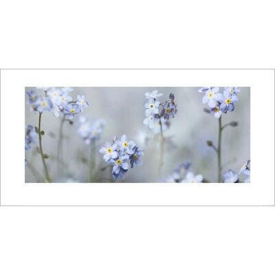 Art Group Forget Me Nots by Ian Winstanley Photographic Print