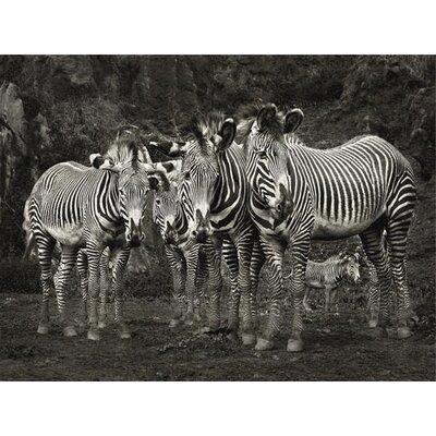 Art Group Zebras by Marina Cano Canvas Wall Art