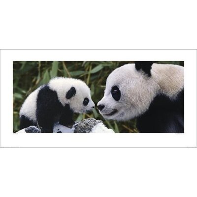 Art Group Panda Bear With Cub by Steve Bloom Photographic Print