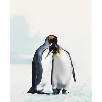Art Group King Penguin by Joel Simon Canvas Canvas Wall Art