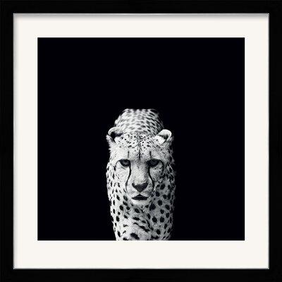Art Group Acinonyx Jubatus by Nicolas Evariste Framed Photographic Print