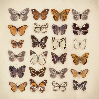Art Group Butterfly Collection by Ian Winstanley Canvas Wall Art