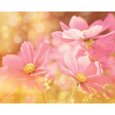 Art Group Pastel Pink Cosmos by Ros Berryman Canvas Wall Art