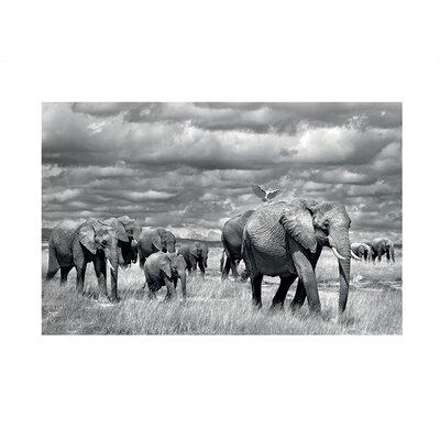 Art Group Elephants of Kenya by Marina Cano Photographic Print