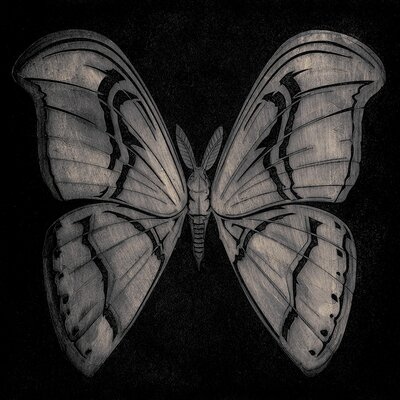 Art Group Barry Goodman - Moth Canvas Wall Art