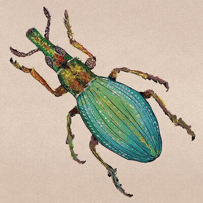 Art Group Lily Greenwood - Weevil Canvas Wall Art