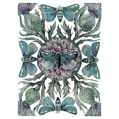 Art Group Amanda Colville - Moths and Thistles Canvas Wall Art