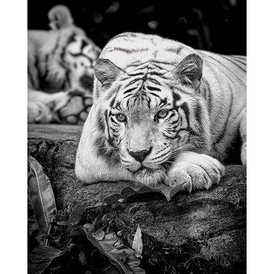 Art Group Pete Seaward - Tiger Stare Canvas Wall Art