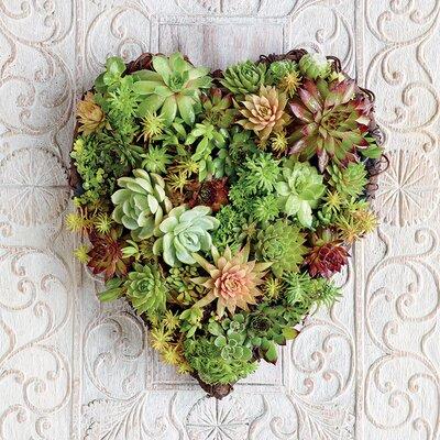 Art Group Howard Shooter - Succulent Heart Canvas Wall Art