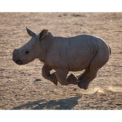 Art Group Pete Seaward - Rhino Run Canvas Wall Art
