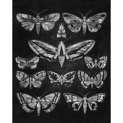 Art Group Barry Goodman - Eleven Moths Canvas Wall Art