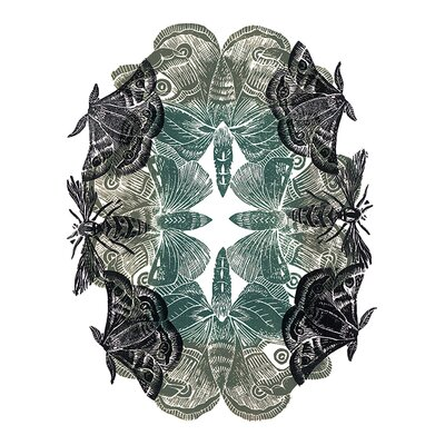 Art Group Amanda Colville - Moths Canvas Wall Art