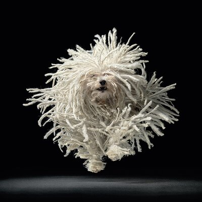 Art Group Flying Mop - Tim Flach Photographic Print Canvas