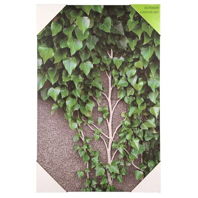 Pacific Lifestyle Ivy Vine and Leaves Photographic Print on Canvas
