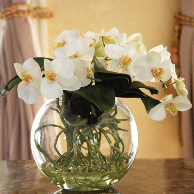 Orchid Phalaenopsis With Vase Wayfair