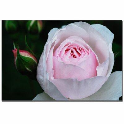 Trademark Fine Art 'Pink Rosebud' by Kurt Shaffer Photographic Print on Wrapped Canvas