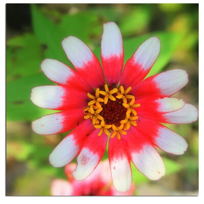 Trademark Fine Art 'Flower on Flower' by Patty Tuggle Framed Photographic Print on Wrapped Canvas