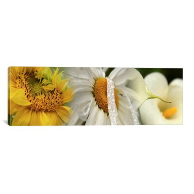iCanvas Panoramic Flowers Photographic Print on Canvas