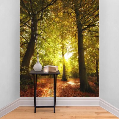 The Binary Box Autumn Tree Forest Self Adhesive Wallpaper