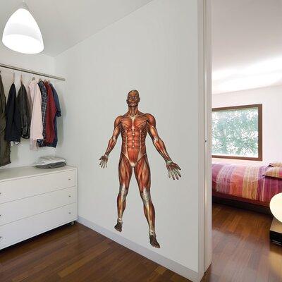 The Binary Box Educational Human Muscle Wall Sticker