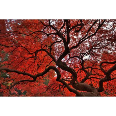 Innova Autumn Maple Tempered Glass Photographic Print