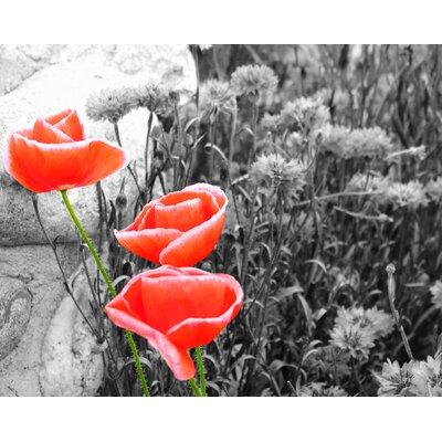 Innova Glass Spring Morning Flowers Tempered Glass Graphic Art