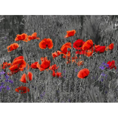 Innova Glass Red Field Poppies Tempered Glass Graphic Art