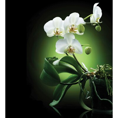 Innova Orchids Tempered Glass Photographic Print