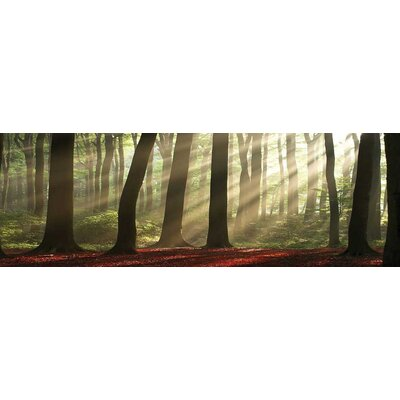 Innova Forest Morning Tempered Glass Photographic Print
