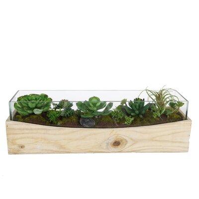 Desktop Succulent Plant in Planter