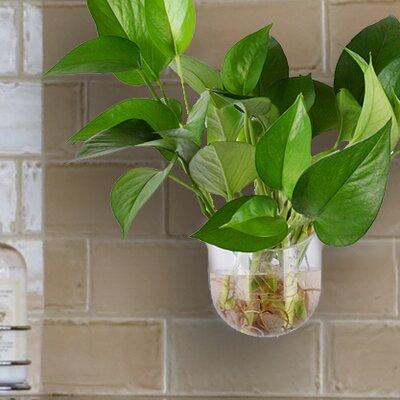 Meisel Window Mount Vase Plastic Wall Planter