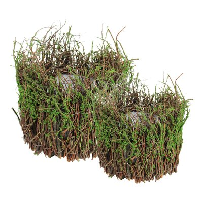 Henslee 2-Piece Moss Pot Planter Set