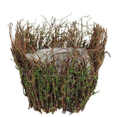 Henslee Moss Pot Planter
