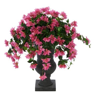 Bougainvillea Floor Flowering Plant in Urn Flowers Color: Pink, Base Color: Black