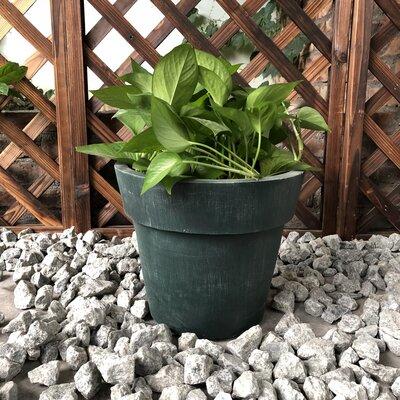 """Nikhil Stackable Concrete Pot Planter Size: 10"""" H x 11"""" W x 11"""" D, Color: Mossy"""