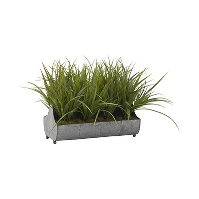 Wild Grass Floor in Planter