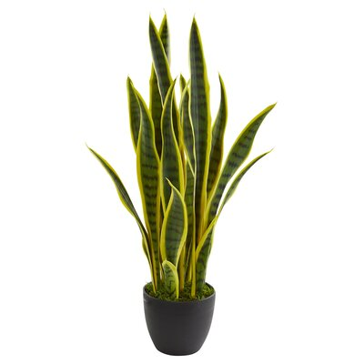 Places To Buy Inexpensive Sansevieria Floor Foliage Plant In Vase