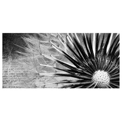 Mantiburi Paneel Pusteblume Schwarz & Weiß Photodruck